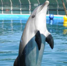 Report about Dolphin Therapy Center in Marmaris