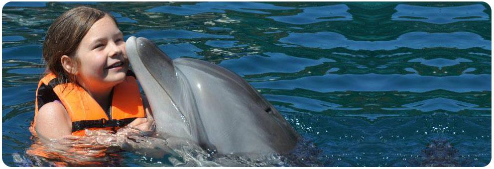 Delfintherapie Anfrage Onmega