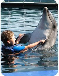 Delphin Therapie Allgemein