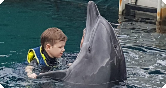Dolphin Therapy for Lutz: Dancing with Dolphin